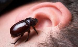 แมลงเข้าหู